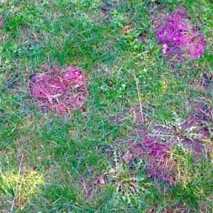 paintedgrass